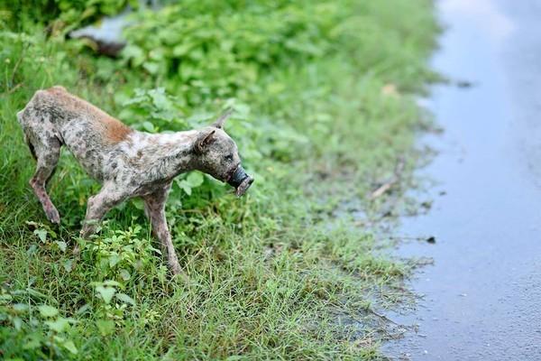 Sau 1 năm, chú chó bị hoại tử mõm tại Bến Tre đã hồi phục thế này đây! - Ảnh 3.