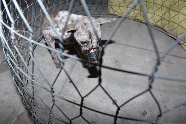 Sau 1 năm, chú chó bị hoại tử mõm tại Bến Tre đã hồi phục thế này đây! - Ảnh 4.