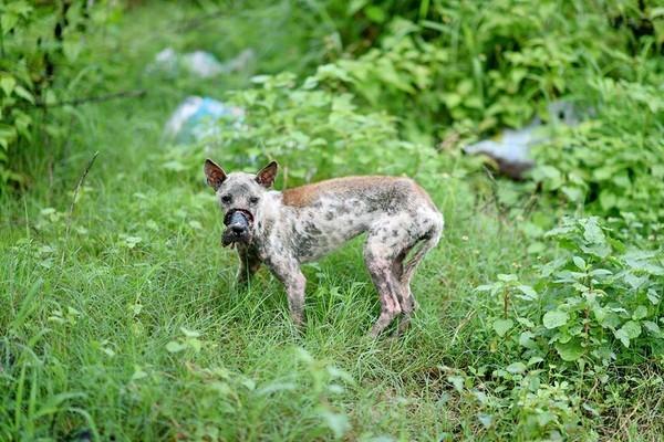Sau 1 năm, chú chó bị hoại tử mõm tại Bến Tre đã hồi phục thế này đây! - Ảnh 2.