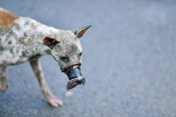 Sau 1 năm, chú chó bị hoại tử mõm tại Bến Tre đã hồi phục thế này đây! - Ảnh 5.