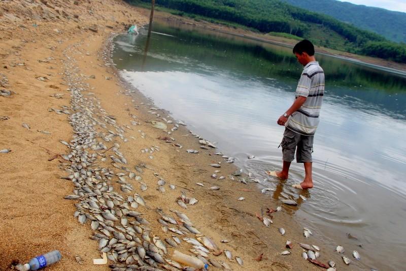 Cá chết xếp lớp ở hồ Phước Hà gây ô nhiễm nghiêm trọng - ảnh 1