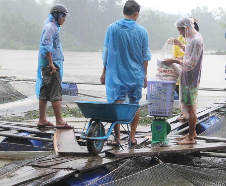Dân than trời vì hàng chục lồng cá bị nước cuốn trôi - ảnh 2