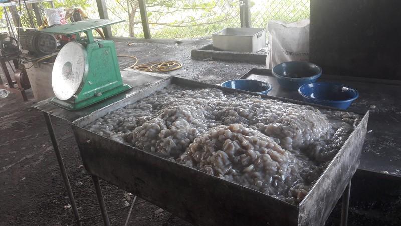 Bắt điểm chế biến cà phê và khô cá sử dụng phụ gia - ảnh 6