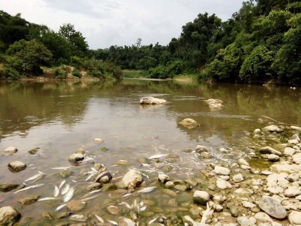 Cá chết hàng loạt trên sông chuyển màu đen - ảnh 1