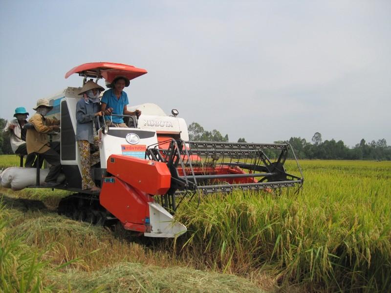 Long An xây dựng thương hiệu gạo Nàng Thơm Chợ Đào - ảnh 1