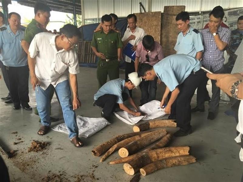 Tiếp tục phát hiện nhiều ngà voi châu Phi giấu trong gỗ - ảnh 1