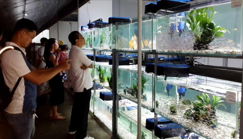 TP.HCM xuất khẩu châu Âu hơn 12 triệu con cá cảnh  - ảnh 1