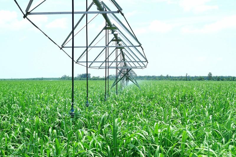 Hơn 15.000 tỉ đồng đầu tư vào nông nghiệp tỉnh Tây Ninh - ảnh 1