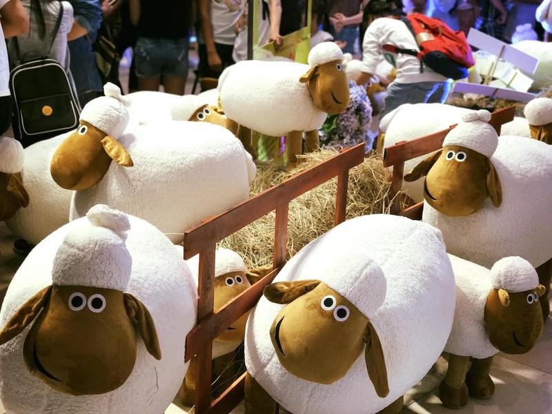 Ở TP.HCM chụp ảnh miễn phí với cừu như Ninh Thuận - ảnh 2