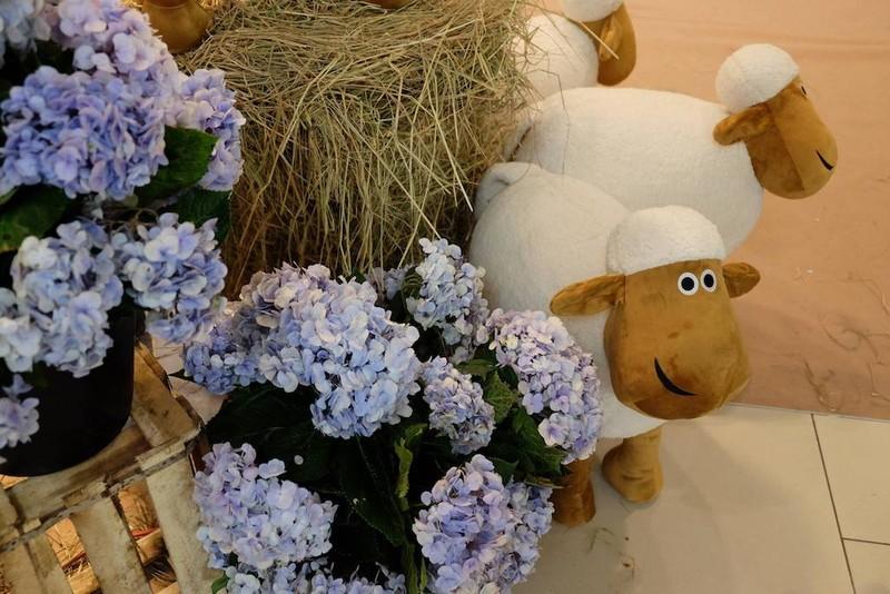 Ở TP.HCM chụp ảnh miễn phí với cừu như Ninh Thuận - ảnh 6