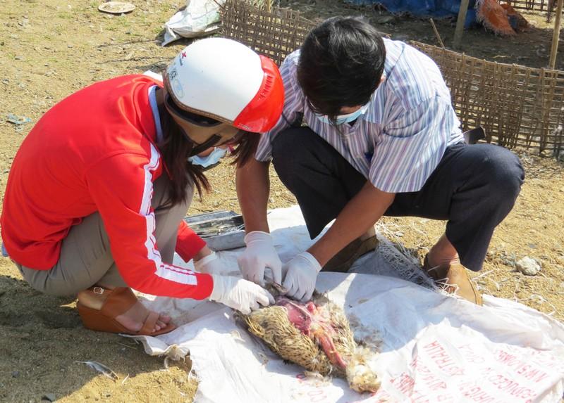 Hàng trăm xác vịt trôi lềnh bềnh trên sông Ba - ảnh 2