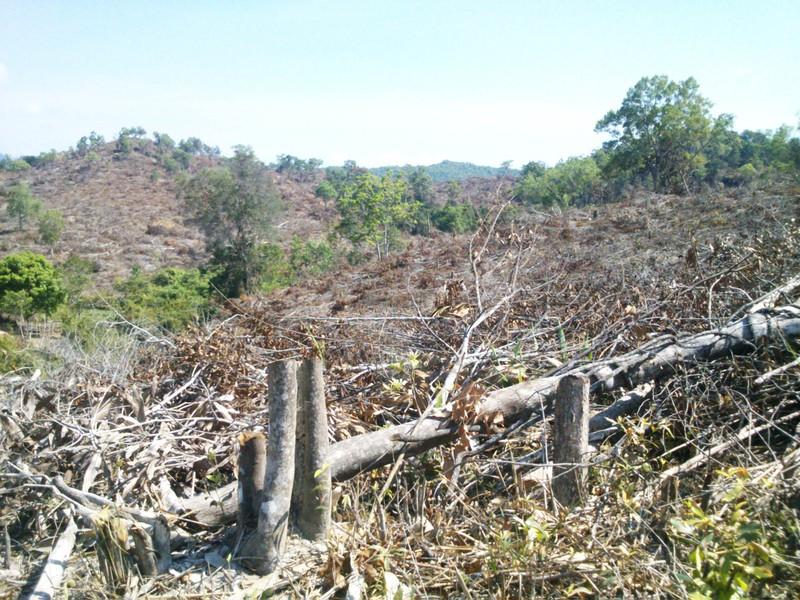 Phú Yên: Điều tra vụ chặt hạ 108 ha rừng - ảnh 2