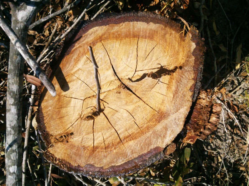 Phú Yên: Điều tra vụ chặt hạ 108 ha rừng - ảnh 5
