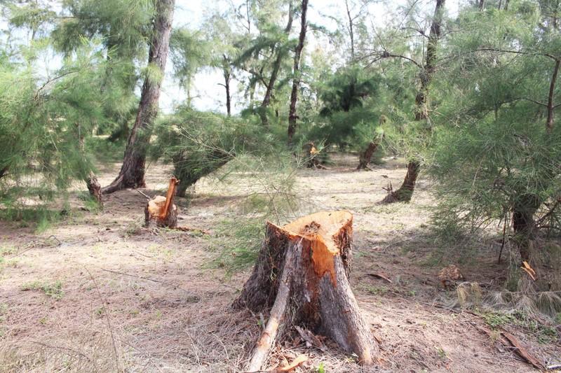 Phó Thủ tướng yêu cầu báo cáo vụ HTX phá rừng  - ảnh 2