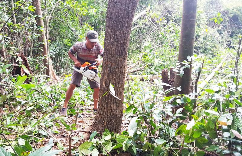 Yêu cầu Phú Yên công bố kết luận các dự án phá rừng - ảnh 2