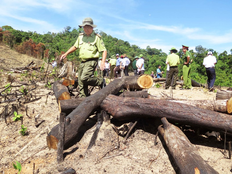 Bắt giám đốc chủ mưu phá 61 ha rừng - ảnh 1