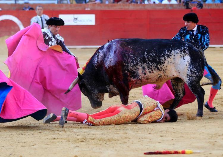 Bàng hoàng chứng kiến cảnh đấu sĩ bị bò tót tấn công đến chết - ảnh 1