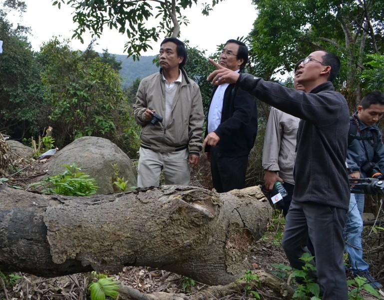 Tạm đình chỉ năm cán bộ kiểm lâm sau vụ xâm phạm rừng Sơn Trà - ảnh 1