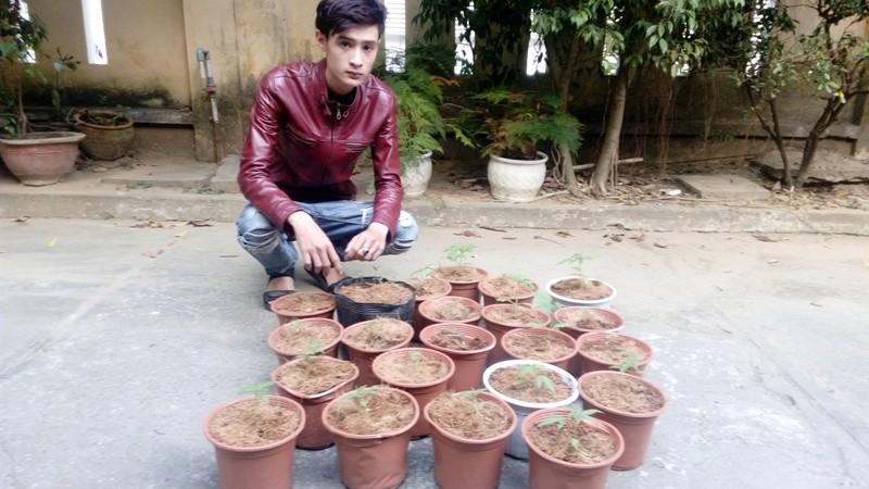 Bắt khẩn cấp thanh niên mua hạt... cần sa trên mạng về trồng, bán - ảnh 1