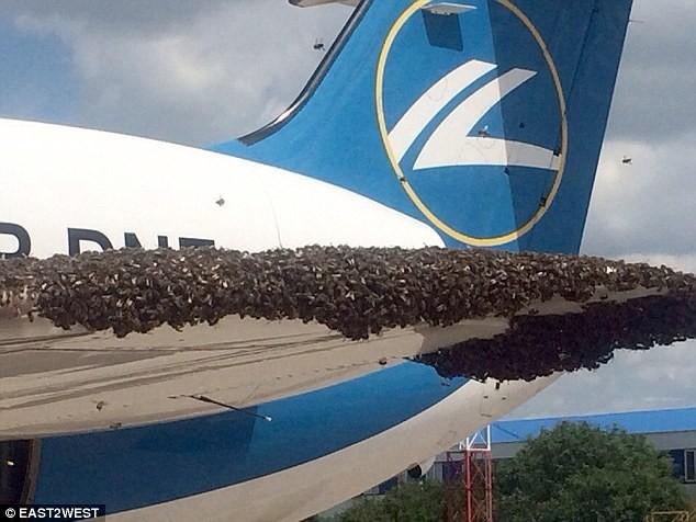 Hàng nghìn con ong 'tấn công' máy bay Nga - ảnh 1