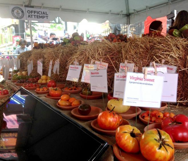 Lễ hội cà chua New York xuất hiện kỷ lục Guiness mới - ảnh 1