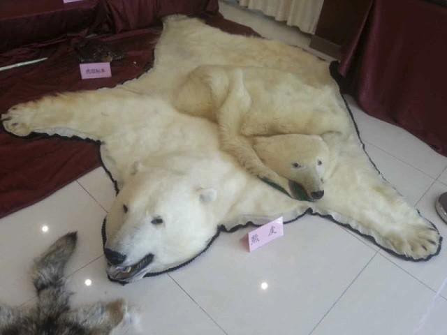 Bắc Kinh bắt nhóm buôn động vật hoang dã hàng triệu USD - ảnh 1