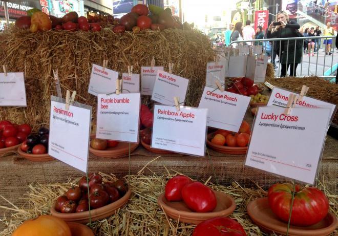 Lễ hội cà chua New York xuất hiện kỷ lục Guiness mới - ảnh 2