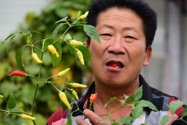 'Vua ớt' Trung Quốc ăn 2,5 kg ớt/ngày - ảnh 2