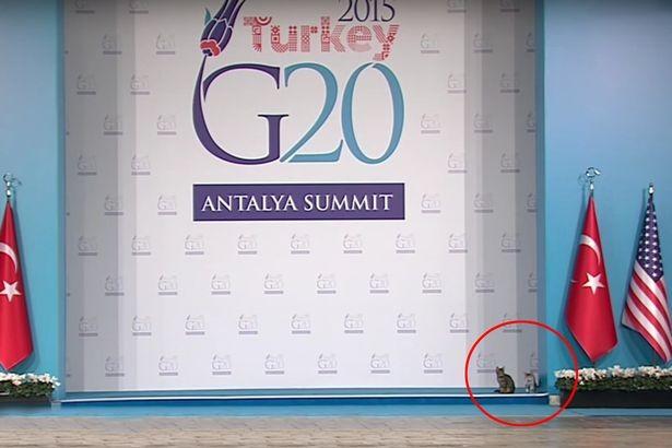 Mèo 'đột nhập' hội nghị G20, chiếm sân khấu nguyên thủ - ảnh 3