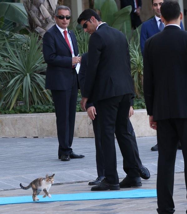 Mèo 'đột nhập' hội nghị G20, chiếm sân khấu nguyên thủ - ảnh 1