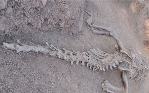 Phát hiện hóa thạch khủng long 180 triệu năm tuổi tại Trung Quốc - ảnh 1