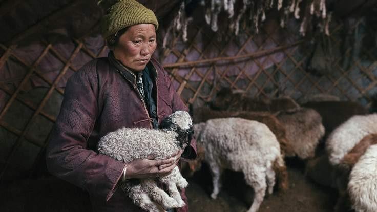 350.000 gia súc tại Mông Cổ chết, dân giàu bỗng thành nghèo - ảnh 1