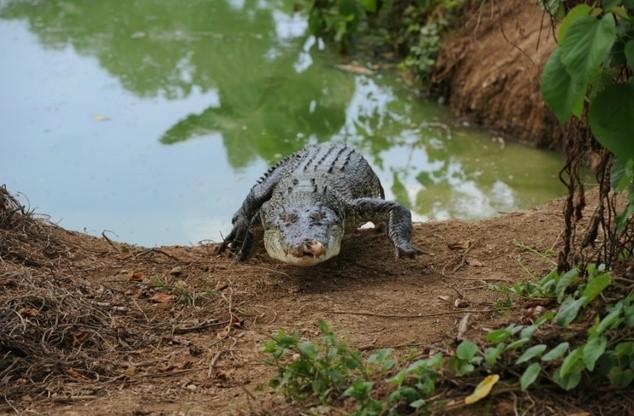 Du khách Nga bị cá sấu cắn chết ở Indonesia - ảnh 1