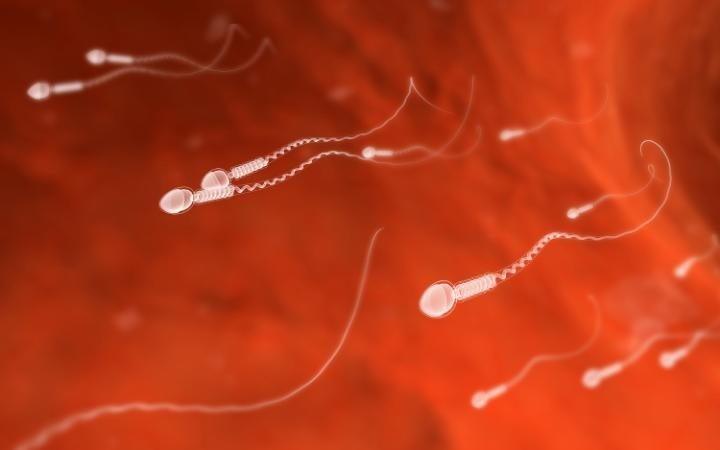 Tây Ban Nha tạo được tinh trùng từ tế bào da người - ảnh 1