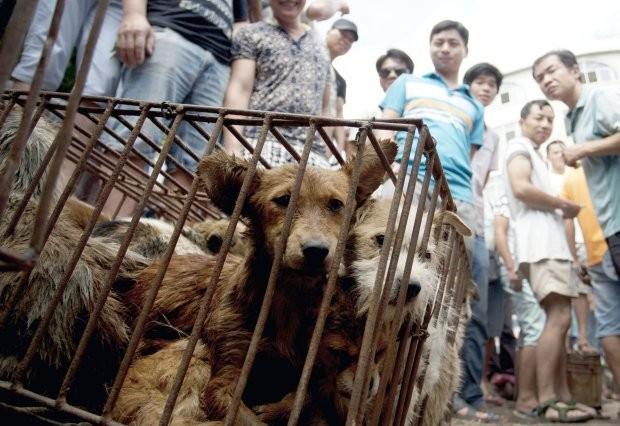 Trung Quốc cam kết 'dẹp tiệm' lễ hội thịt chó - ảnh 2