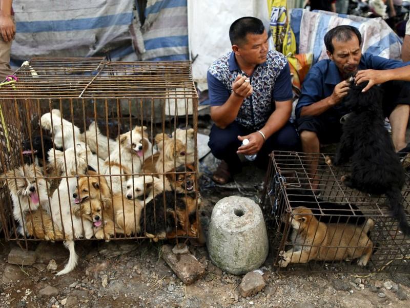 Trung Quốc cam kết 'dẹp tiệm' lễ hội thịt chó - ảnh 3