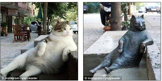 Chú mèo có dáng ngồi 'khó đỡ' được dựng tượng tưởng nhớ
