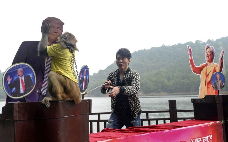 'Vua khỉ' Trung Quốc đoán ông Trump sẽ là tổng thống Mỹ - ảnh 1