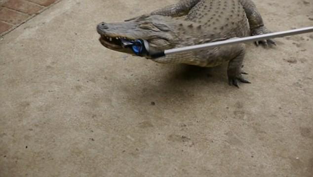 Cá sấu cắn điện thoại iPhone 7, điều gì sẽ xảy ra? - ảnh 2