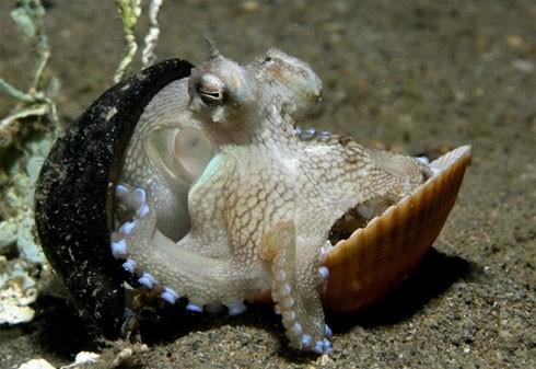 10 điều bí ẩn dưới đáy đại dương gây sốc - ảnh 1