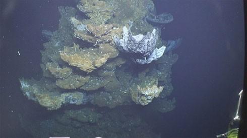 10 điều bí ẩn dưới đáy đại dương gây sốc - ảnh 5