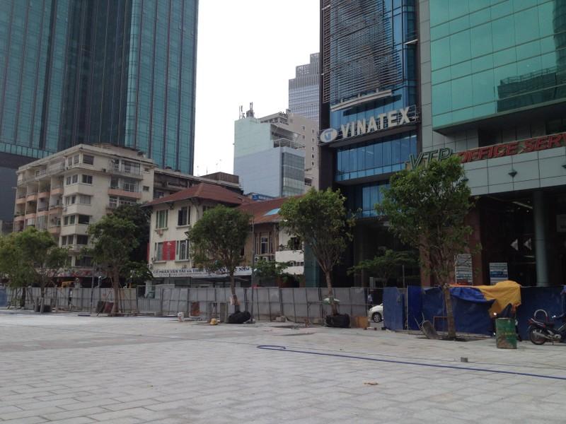 Có nên thay cây giáng hương trên đường Nguyễn Huệ? - ảnh 1