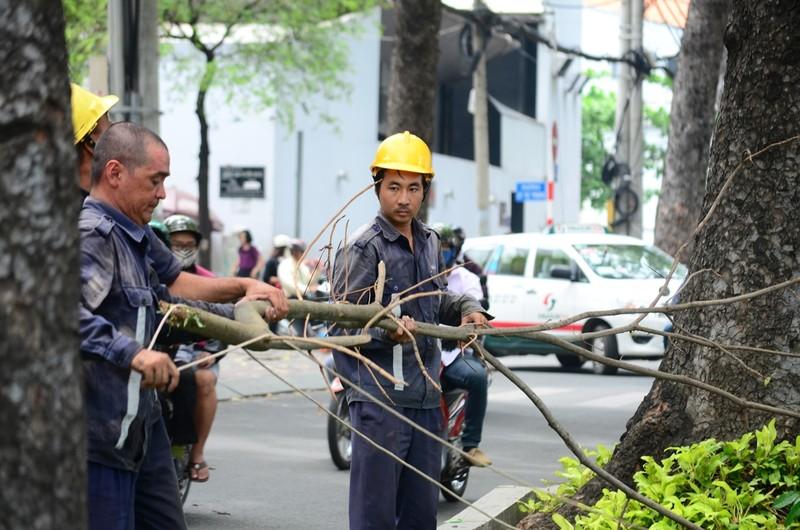 TP.HCM: Chặt tỉa cây xanh có nguy cơ gãy đổ - ảnh 1