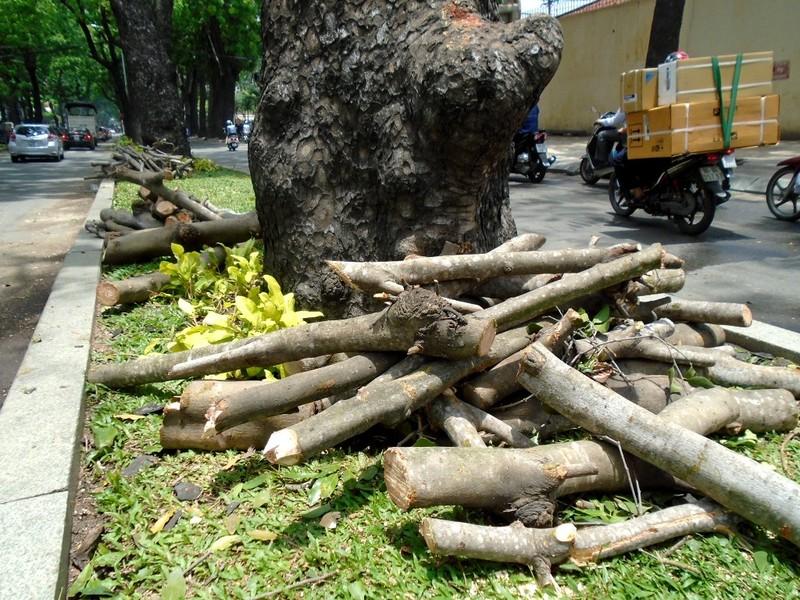 TP.HCM: Chặt tỉa cây xanh có nguy cơ gãy đổ - ảnh 2