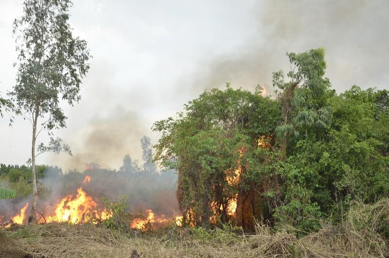 Cháy lớn ở khu cỏ lau huyện Bình Chánh - ảnh 1