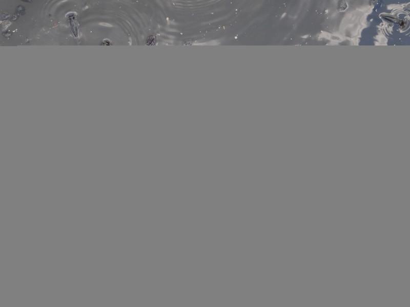 Tìm loại cá thích hợp với kênh Nhiêu Lộc- Thị Nghè - ảnh 2