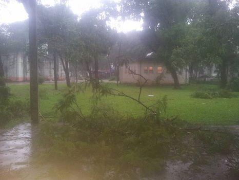 Hà Nội mưa giông kinh hoàng, cây đổ, xe lật, nhà bật móng - ảnh 2