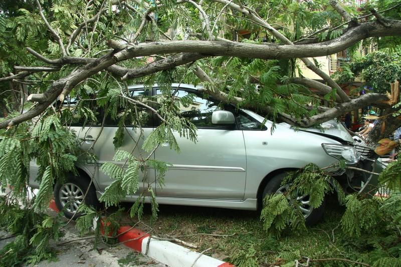 Innova 7 chỗ bẹp dúm sau khi tông gẫy đôi cây trên phố Hà Nội  - ảnh 8