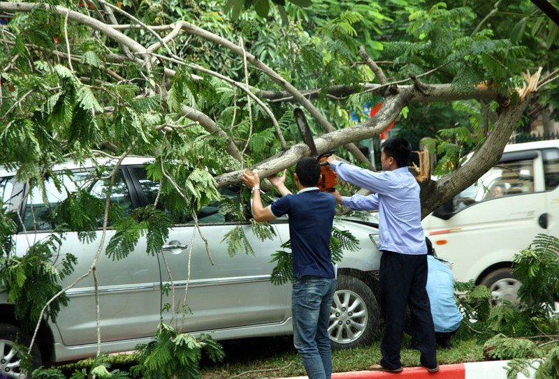 Innova 7 chỗ bẹp dúm sau khi tông gẫy đôi cây trên phố Hà Nội  - ảnh 5