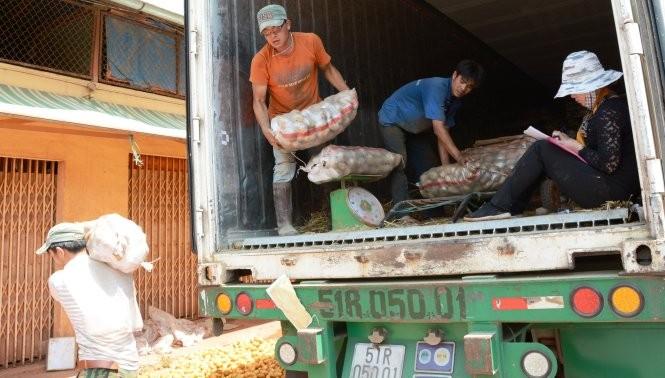 Khoai tây Trung Quốc ở thời điểm còn được nhập vào chợ nông sản Đà Lạt